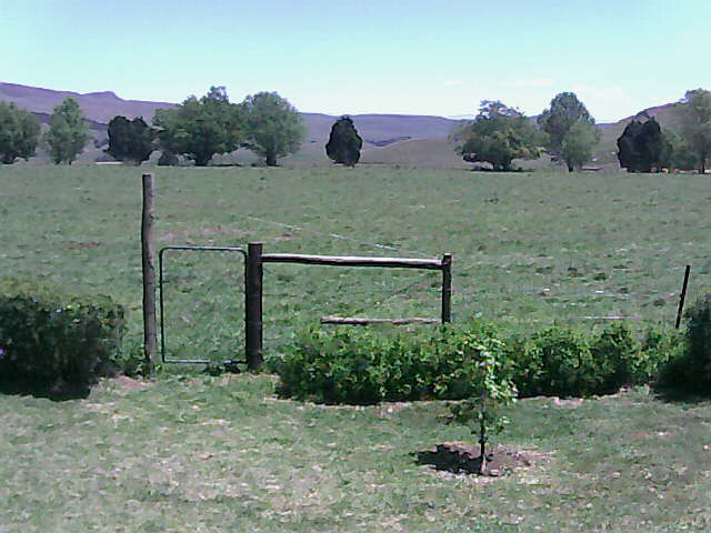 Hastings Farm, Upper Dargle, KZN